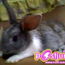 กระต่ายตัวน้อยๆๆ ของผมเอง (หัดโพสครับ)