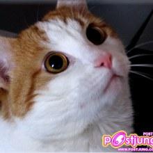 ๛คนรัก แมว ห้ามพลาด๛(40รูป)