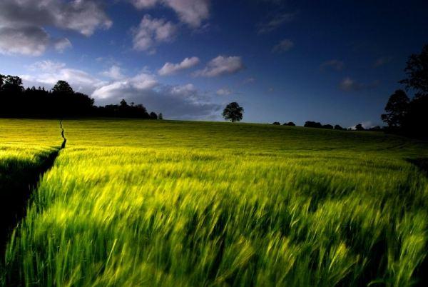 Field