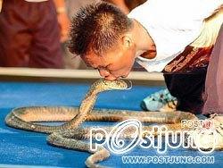 คนจูบงูติดต่อกันมากที่สุดในโลก(19ตัว) ชาวขอนแก่น