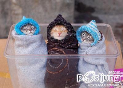 แมว น่ารักๆ