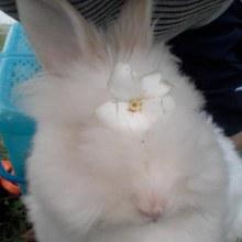 กระต่ายเราเอง