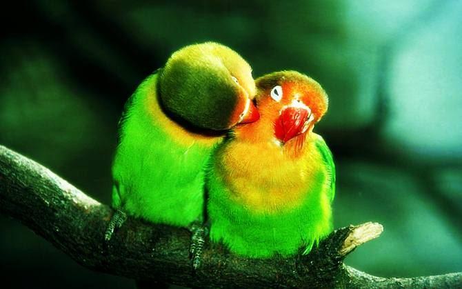 เสียงใสใส...มีสีสัน..นกแก้ว