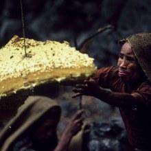 คนเก็บน้ำผึ้ง เนปาล กับวิธีตามหาน้ำผึ้ง ที่กำลังจะถูกลืม