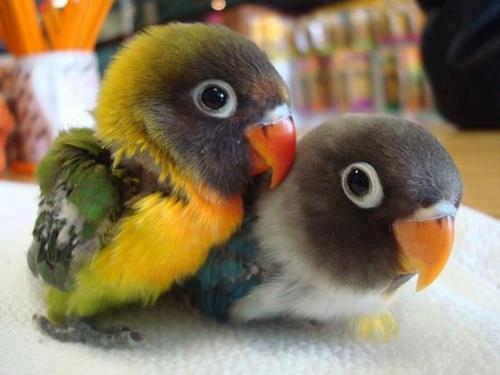 สัตว์โลกแสนน่ารัก
