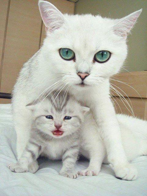 แม่และลูก