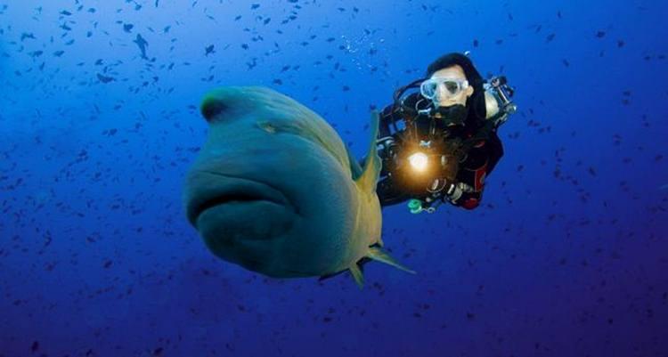 สัตว์แปลก...ใต้ทะเลลึก