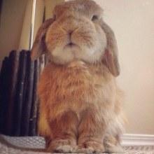 Bunny RAMBO