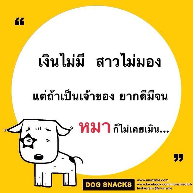 คำคม หมา หมา