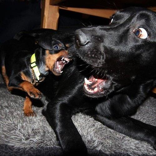 รวมภาพน้องหมาขำๆ
