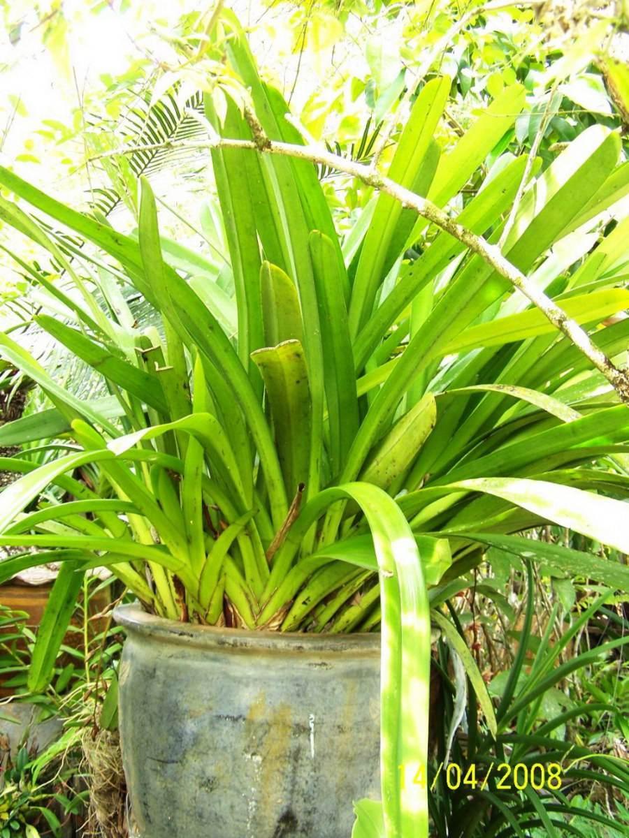 พืชสวย Beauty Plant