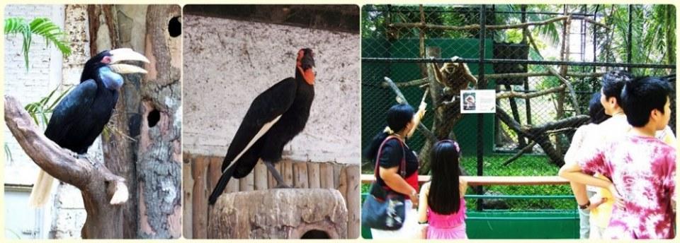 สัตว์ต่าง ๆ ที่ซาฟารีเวิลด์  safari world