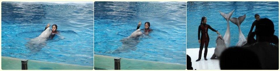 การแสดงโลมา วาฬขาว ที่ ซาฟารีเวิลด์