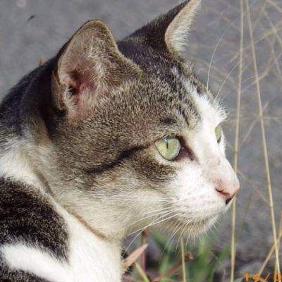 แมวไทย Cat in Thailand