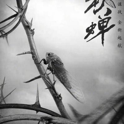 秋蝉 Autumn Cicada