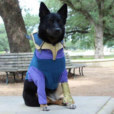 มะหมา Superhero