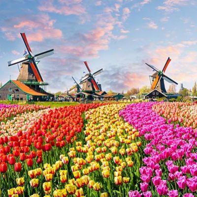 ทุ่งดอกไม้และสวนสวย ๆ จากทั่วโลก