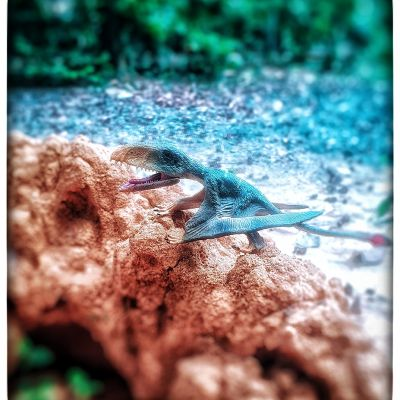 โมเดล ไดโมโพดอล modal Dimorphodon