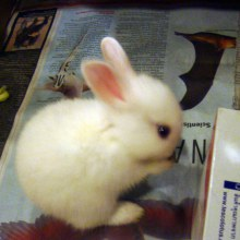 กระต่ายน่ารักที่สุดในโลก