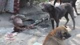 ประสานการช่วยเหลือหญิงใจบุญดูแลสุนัขกว่า 50 ชีวิต มานานนับสิบปี (จากศูนย์ฯ ระยอง)