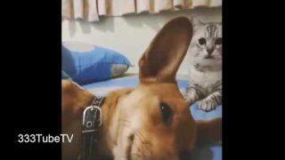 คลิปแมวตลกโครตฮา #1