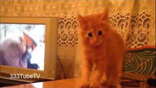 คลิปแมวตลกโครตฮา #2