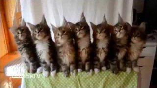 คลิปแมวตลกโครตฮา #3