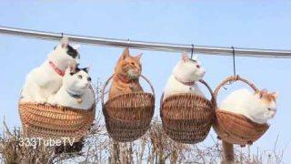 คลิปแมวน่ารักๆ