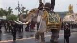 ช้างอยุธยา11เชือก ถวายอาลัย  ในหลวง  หน้าพระบรมมหาราชวัง