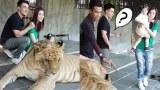 ตั๊ก บริบูรณ์ ออกอาการซะเอง? เมื่อพา เอลซี่ & น้องบีลีฟ ถ่ายรูปคู่เสือ ที่สวนสัตว์หัวหิน