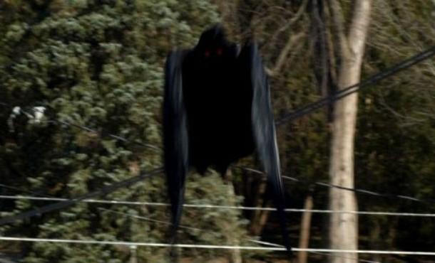 news-mothman-610x370