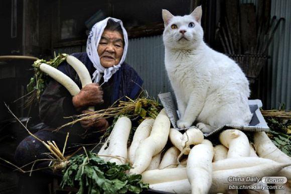 Grandma and the cat 9