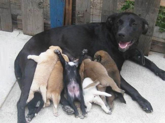 Proud-Dog-Mommies-02