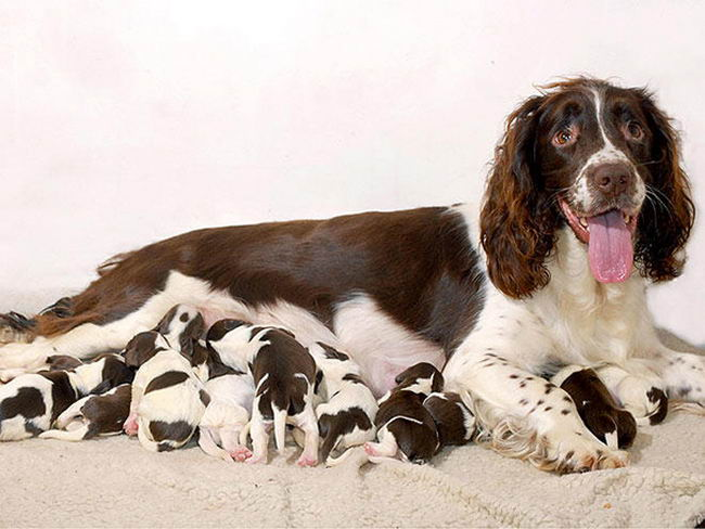 Proud-Dog-Mommies-18