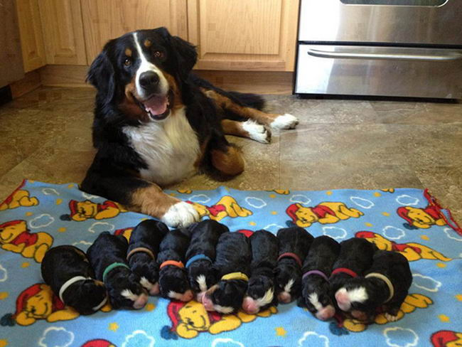 Proud-Dog-Mommies-22